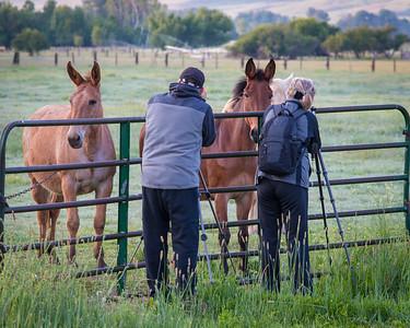 Students shooting horses in Halfway