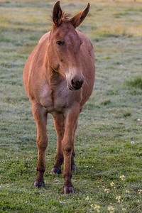 Horse in Halfway