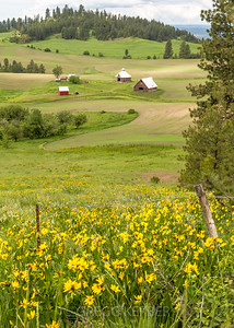 Round barn and wildflowers near Flora
