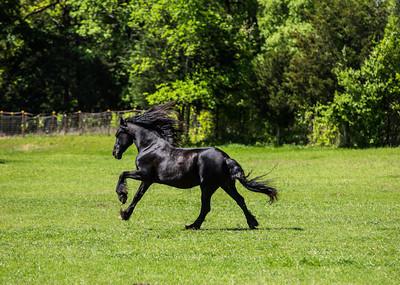 2013 North Texas Equine Workshop