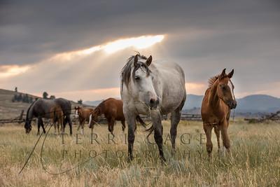 2017 Powderhorn Retreat - Douglas Wyoming