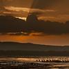 Lake Naluru NP, Rift Valley, Kenya