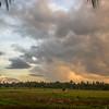 Rice fields of Ubud, Bali, Indonesia