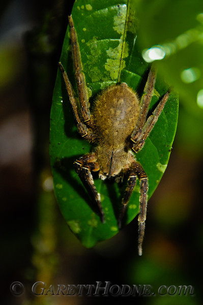 Rather large spider
