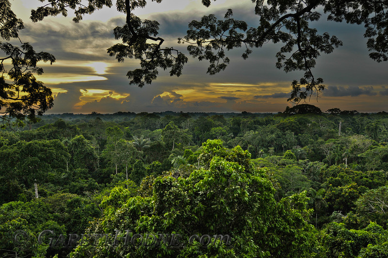 Dawn from the Canopy tower near Napo Lodge.