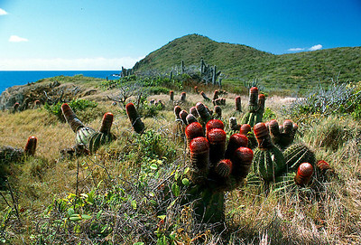 Cactus at Drunk Bay