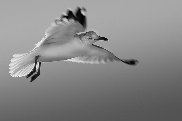 Balboa Beach Birds