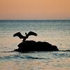 pelicans_sunset-8