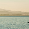 Pelican_Sunrise-16