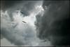 Seagulls and storm clouds.  Riverview Park, Sebastian, Florida.