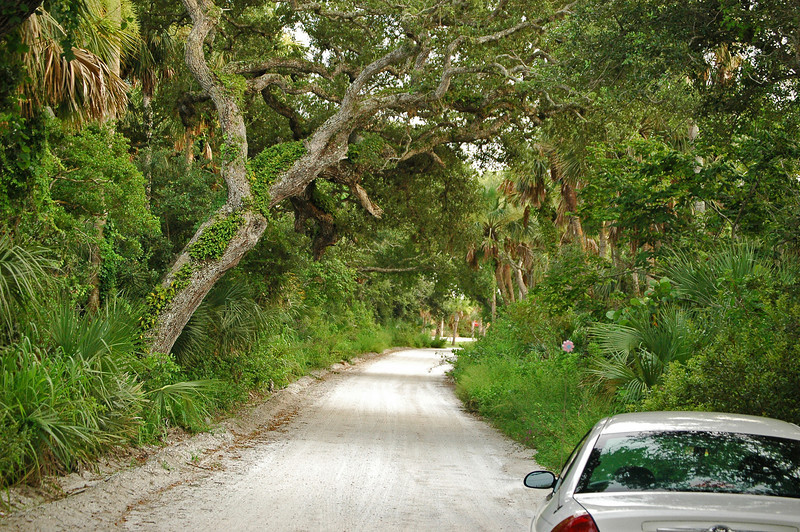 Dirt road, just off A1A in Indian River County.  This humble road leads you to Pelican Island National Wildlife Refuge.  The very first National Wildlife Refuge in the U.S.  Teddy Roosevelt named it so in 1903.