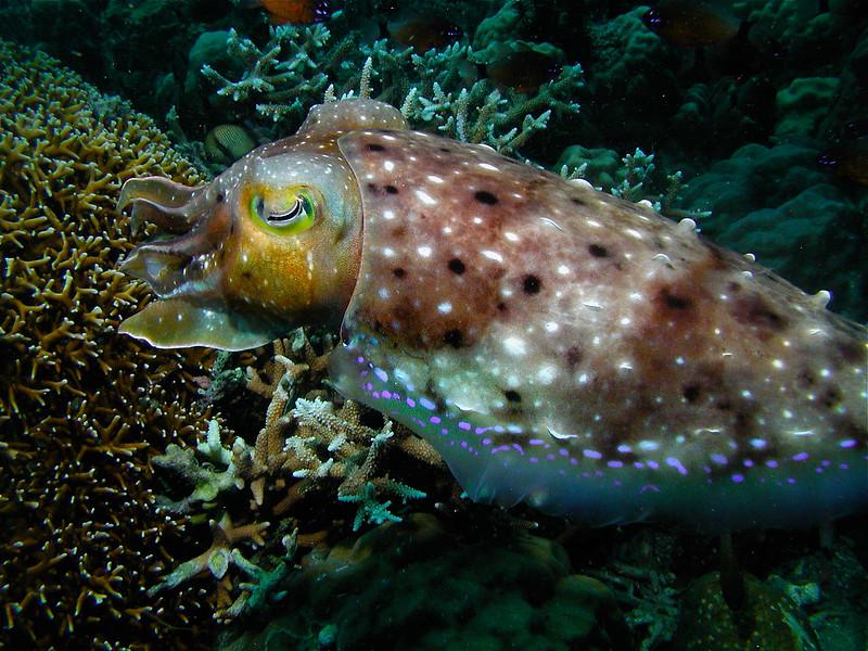 Cuttlefish Magic
