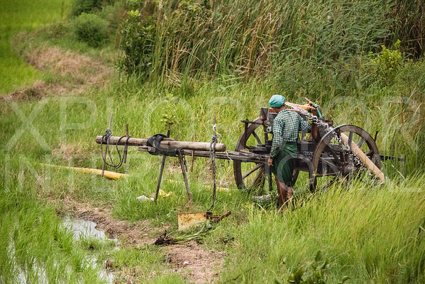 Pumping Water into the Rice Paddy