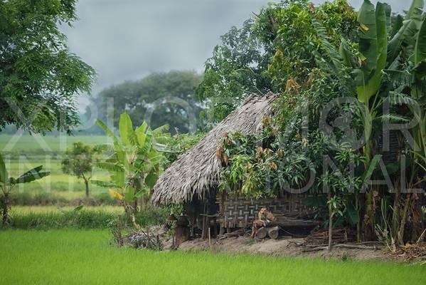 Rural Burmese Living