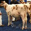 WDEAyrshire15_DSCN5550