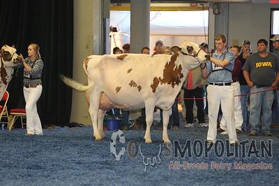 WDE Ayrshire Senior Cows 2015