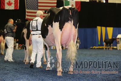 WDE Holstein Senior Cows 2015