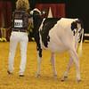 WDE16_Holstein_1M9A6743