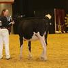 WDE16_Holstein_1M9A6737