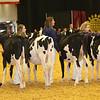 WDE16_Holstein_1M9A6726