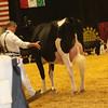 WDE16_Holstein_1M9A7891