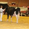 WDE16_Holstein_1M9A7889