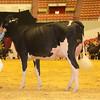 WDE16_Holstein_1M9A7895