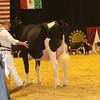 WDE16_Holstein_1M9A7890