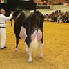 WDE16_Holstein_1M9A9226