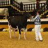 WDE16_Holstein_1M9A9222