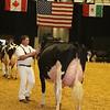 WDE16_Holstein_1M9A9233