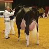 WDE16_Holstein_1M9A9227