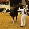 WDE16_Holstein_1M9A9224