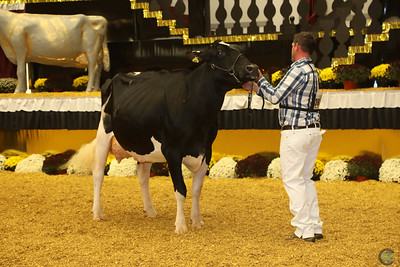 WDE Holstein Senior Cows 2016