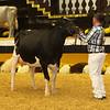 WDE16_Holstein_1M9A9221