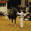 WDE16_Holstein_1M9A9223
