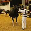 WDE16_Holstein_1M9A9225