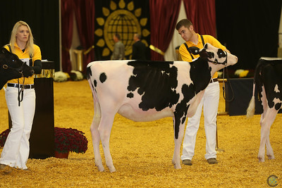 WDE Junior Holstein Hfrs 2016