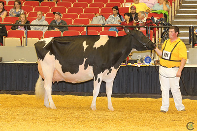 WDE Junior Holstein Sr Cows 16