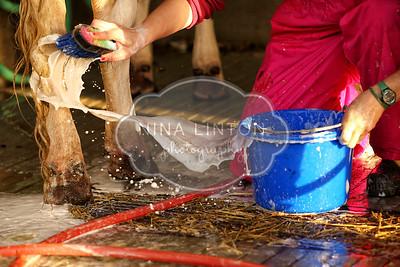 World Dairy Expo Around the Grounds 2016