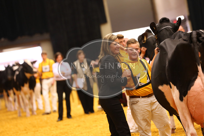 World Dairy Expo Junior Holstein Show 2016
