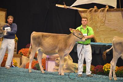 WDE Brown Swiss Heifers 2017