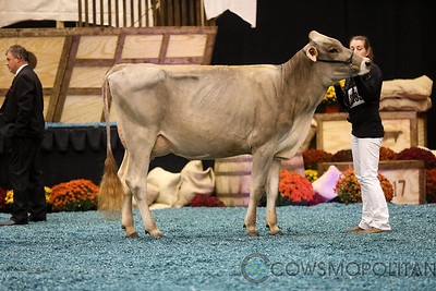 WDE Brown Swiss Int Cows 2017