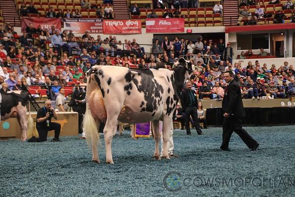 WDE17_Holstein-5841