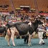 WDE17_Holstein-5844