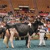 WDE17_Holstein-5845