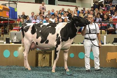 WDE Holstein Int Cows 2017