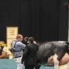 WDE17_Holstein-8387