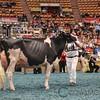 WDE17_Holstein-5842