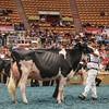 WDE17_Holstein-5846